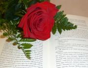 Imatge rosa i llibre