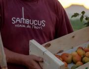 Imatge de la plana web de la cooperativa Sambucus