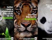 The #lastselfie, una campanya a les xarxes socials de WWF