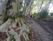 Passejar per un bosc madur té propietats terapèutiques (imatge:accionatura.org)