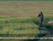 6º jornada de Seguiment d'Ocells Comuns a Catalunya