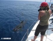 """Conclou el projecte """"Jo també visc al Mediterrani"""", d'Animal Latitude i Submon (imatge:submon.org)"""