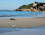 Sortida per descobrir els valors naturals de la platja de Tamarit (imatge: riugaia.cat)
