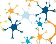 Imatge de Bones pràctiques internacionals de suport a l'emprenedoria social