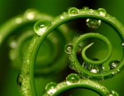 viewing-the-nature-hd-wallpaper-named-green-water-hd-wallpaper-colour-photo-gree