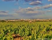 Vinyes del Penedès. Font: vinyesdelpenedes.blogspot.com