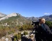 Es busquen voluntaris pel projecte de conservació del voltor a Alinyà (imatge: Fundació Catalunya La Pedrera)