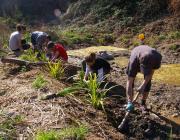 Font: Voluntariat ambiental
