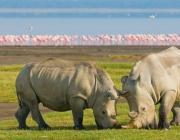Reserva Nacional Masai Mara a Kènia.
