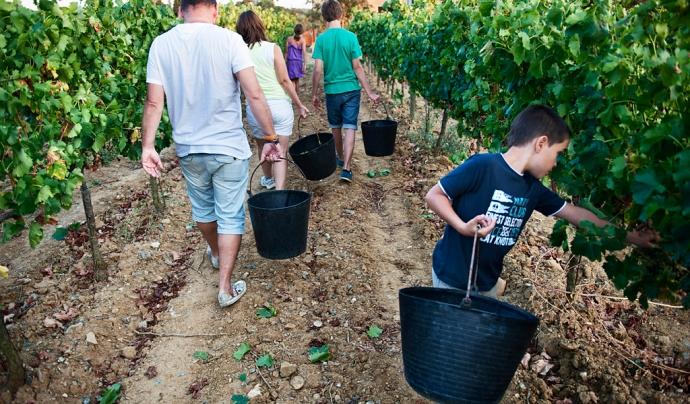 Veremant en família a La Vinyeta Font: Verema Solidària