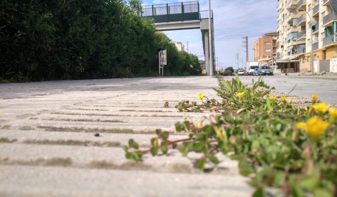 Es demana als ajuntaments que no retirin immediatament la vegetació autòctona. Font: GEPEC