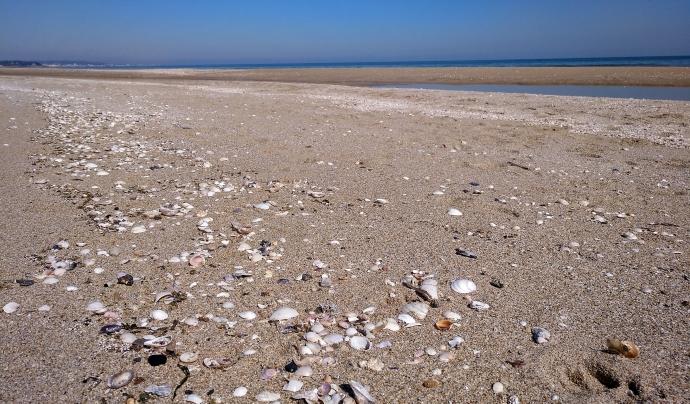 Les platges també han desenvolupat biodiversitat autòctona. Font: GEPEC