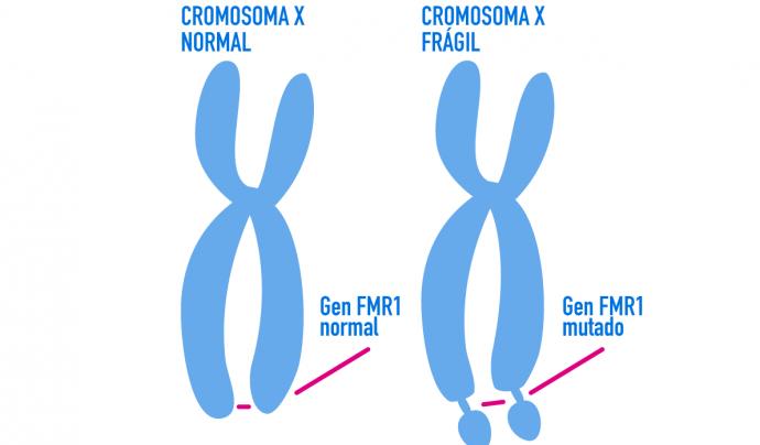 Exemple de la mutació genètica del cromosoma X