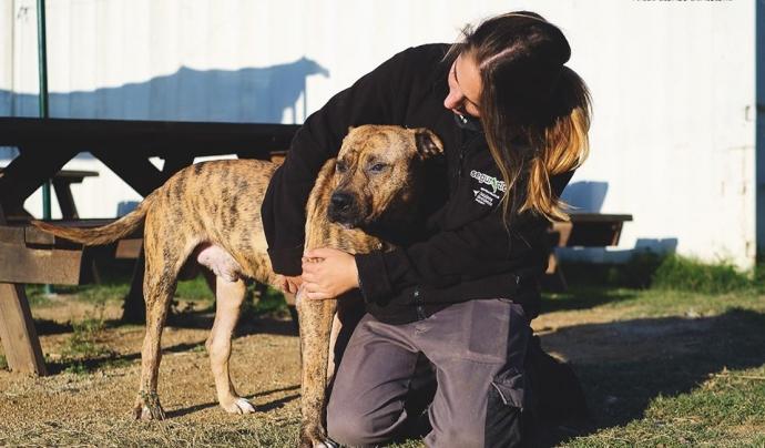 Voluntària de la Protectora de Mataró. Font: Societat Protectora d'Animals de Mataró. Font: Societat Protectora d'Animals de Mataró.