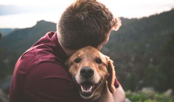 Per cada adopció, es produeixen dos abandonaments. Font: Unsplash. Font: Font: Unsplash.