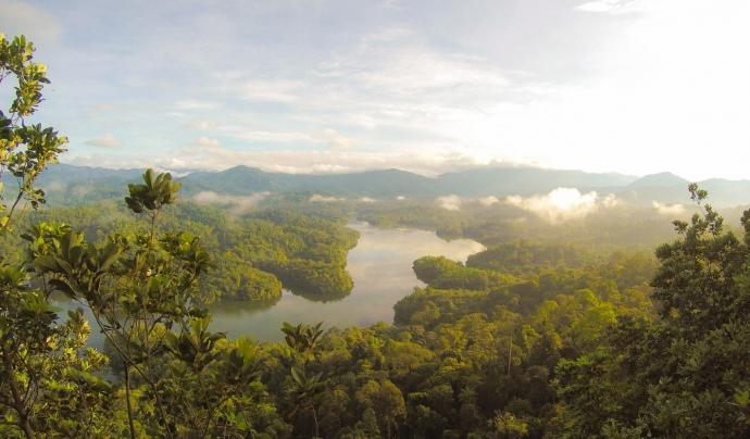 A l'Amazònia, les flames actuen a nivell del terra, però amb això n'hi ha prou per matar arbres molt grans. Font: Unsplash. Font: Font: Unsplash.