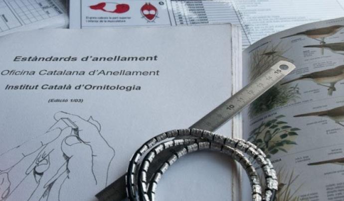 És necessari tenir bons coneixements d'ornitologia, a banda de les tècnques d'anellament (imatge: ornitologia.org)