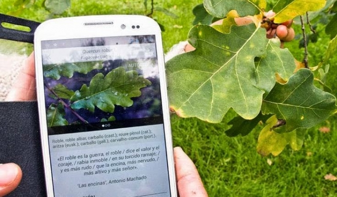 App per identificar les espècies d'arbres de la península ibèrica (imatge: elxoplleida)