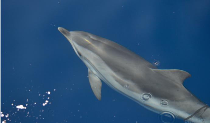 L'objectiu de l'Associació Cetàcea és el de protegir el medi marí a través de diverses tasques. Font: Associació Cetàcea
