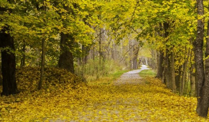 Els arbres són fonamentals en la lluita per millorar el medi ambient. Imatge de Sathish J. Llicència d'ús CC BY-NC-ND 2.0. Font: Sathish J. Llicència d'ús CC BY-NC-ND 2.0.
