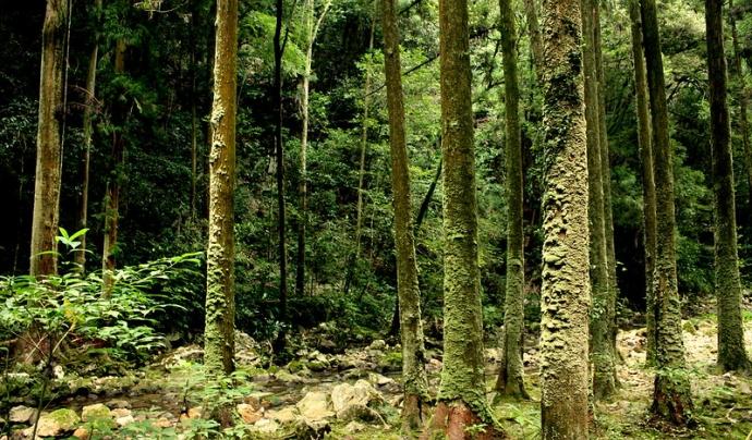 La Wikimedia Foundation colabora amb Plant Your Change, plantant arbres. Llicència d'ús CC BY-NC 2.0 Font: Kohei314. Llicència d'ús CC BY-NC 2.0