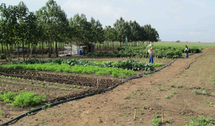 Experiència a Andalusia de Acces to Land Font: Marie Allagnat
