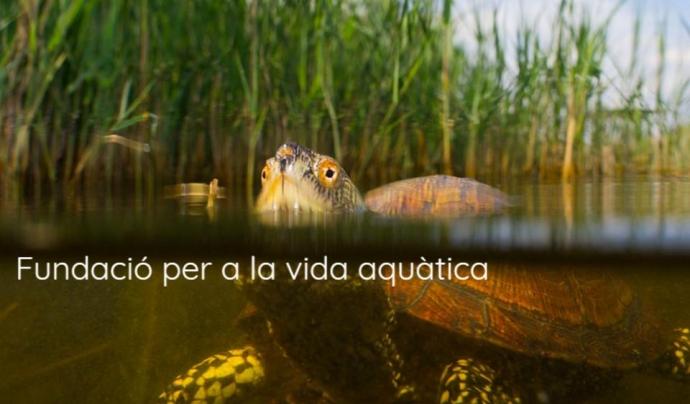 La Fundació Andrena té per missió protegir els hàbitats aquàtics