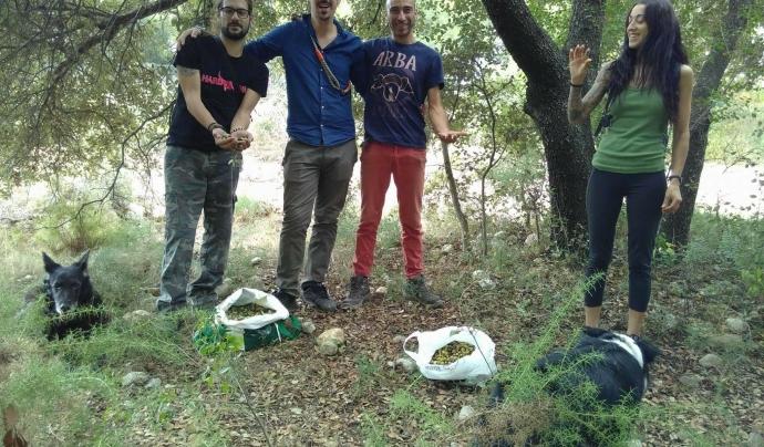 Un grup de voluntariat d'ARBA recol·lectant aglans Font: ARBA