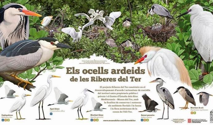 Els ardeis són un dels grups d'aus subjectes al recompte