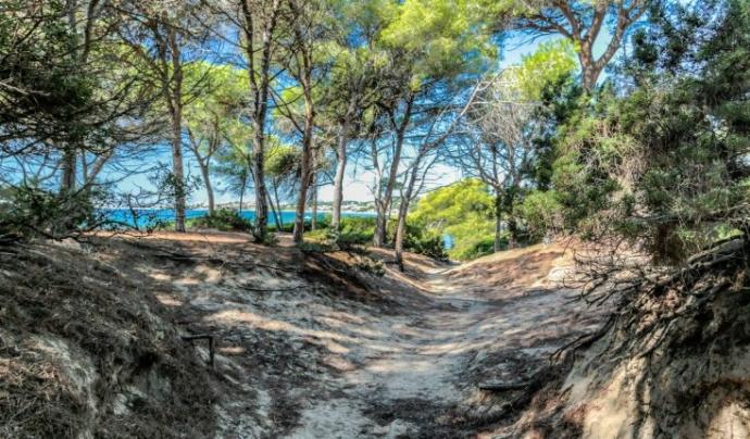 El Bosc de la Marquesa a Tarragona, espai subjecte a un acord de custòdia del territori per garantir-ne la conservació