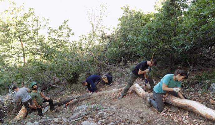 Durant una setmana els voluntaris i voluntàries aprenen criteris tècnics per la conservació dels boscos Font: Associació Boscos de Muntanya