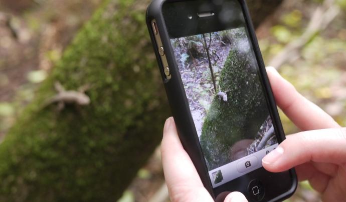 La ciència ciutadana és una forma d'aprendre i divertir-se col·laborant en ciència Font: save_the_redwoods_league