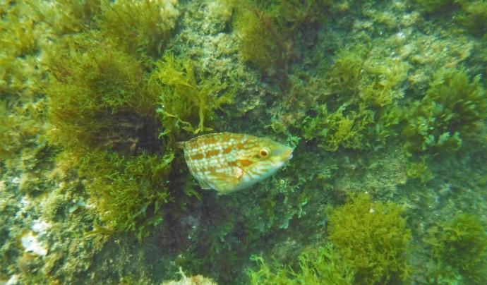 Biodiversitat al mar i a les platges metropolitanes captada per Anèl·lides Font: Anèl·lides