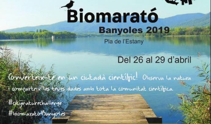 Banyoles participa enguany a la City Nature Challenge i organitza sortides a la recerca d'espècies com papallones, aus o plantes.  Font: Limnos