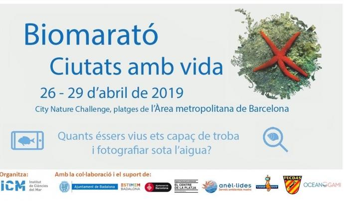 La biomarató al litoral del barcelonès és la gran carta de la ciutat per sumar observacions Font: Biomarató