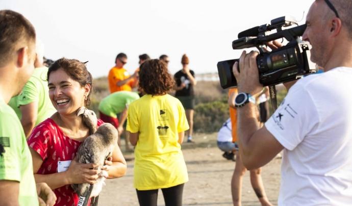 Reportatge sobre l'anellament de polls de flamenc al Delta de l'Ebre Font: CCMA