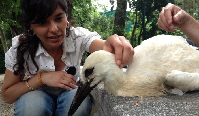 Cori Calero durant un reporatge amb cigonyes Font: CCMA