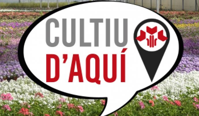 """Els vivers de producció local han creat la marca """"Cultiu d'aquí"""", per identificar les roses de producció local Font: Mercat de la Flor i Planta Ornamental de Catalunya"""
