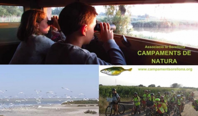 Campament per a joves naturalistes al Delta de l'Ebre amb l'Associació La Sorellona Font: Associació La Sorellona