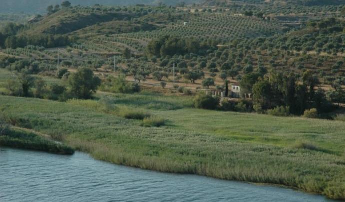 La Reserva Natural de Sebes-Flix, espai conservat per la custòdia amb el Grup de Natura Freixe