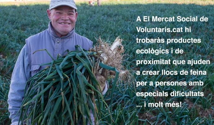 Productes ecològics a El Mercat Social Font: FCVS