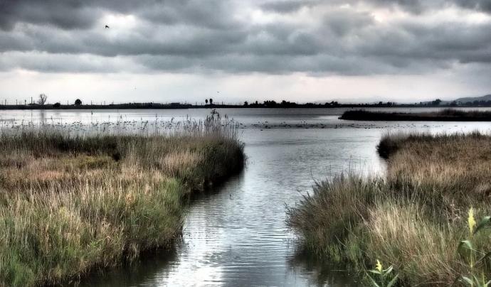 L'aigua del mar s'ha endinsat 3 quilòmetres inundant més de 3.000 hectàrees d'arrossars. Font: CC