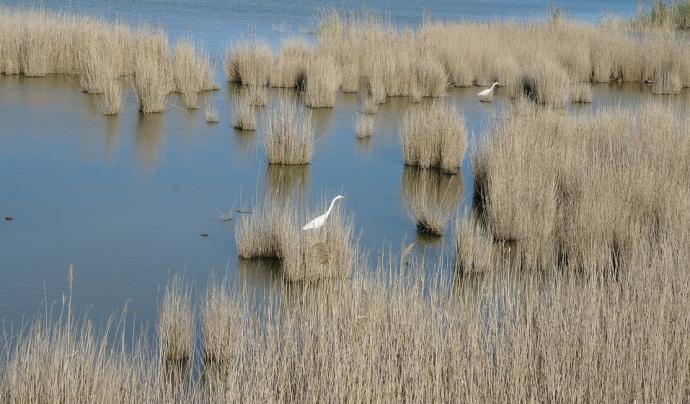 El Delta és una zona humida bàsica per la bona qualitat de vida d'animals i humans Font: CC