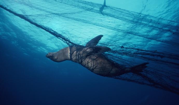 """El film Blue ha estat definit per Greenpeace com a """"una canço per als oceans"""""""