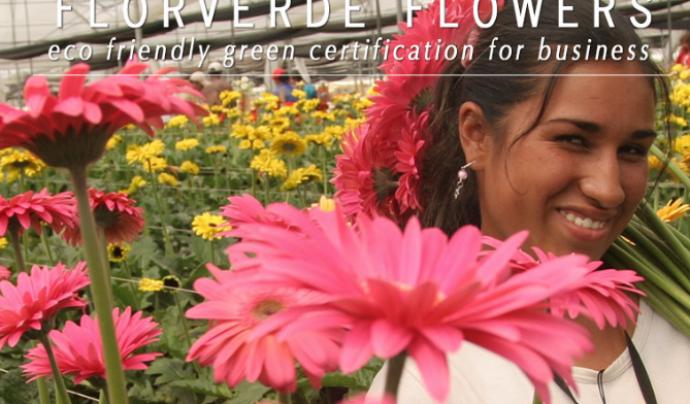 Florverde Sustainable Flowers (FSF) és una certificació independent per assegurar que les roses i altres flors estan cultivades sota estàndards de qualitat social ambiental i produïdes de forma responsable. Font: Florverde