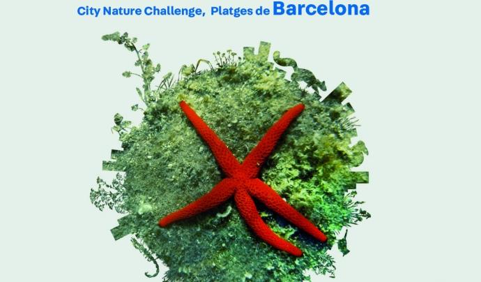 Una biomarató marina a les platges de Barcelona aportarà dades sobre la biodiversitat marina de la ciutat