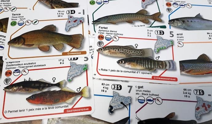 El joc ICTIO és una manera divertida d'aprendre sobre 53 espècies de peixos i sobre els ecosistemes d'aigua dolça Font: GRECO