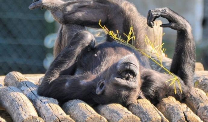 Les imatges publicades per la Fundació Mona expliquen històries sobre el dia a dia dels animals rescatats per la Fundació