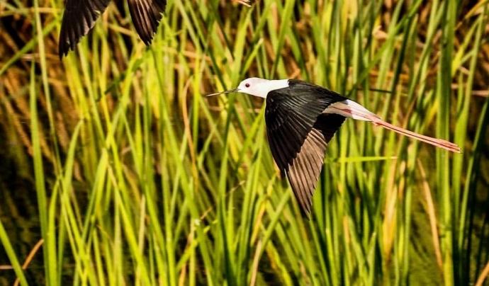 El Grup Natura Freixe publica cada dia imatges de la natura en la Reserva Natural de Sebes, on l'entitat desenvolupa la seva tasca de conservació de la natura