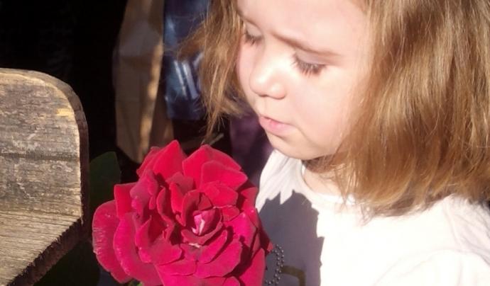 La SCEA planteja la reflexió sobre l'impacte socioambiental de les roses de Sant Jordi Font: @formenteril